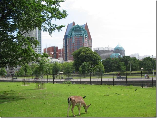 Hertenkamp bij nieuwe city
